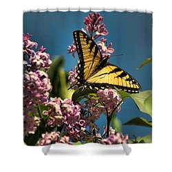 Yellow Swallowtail Shower Curtain by Rick Friedle