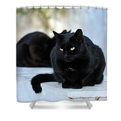 Cat In Hydra Island Shower Curtain by George Atsametakis