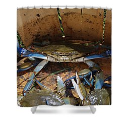 24 Crab Challenge Shower Curtain