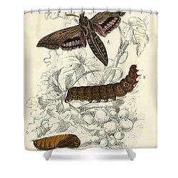 Butterflies Shower Curtain by English School