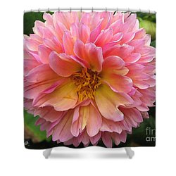 Dahlia From The Showpiece Mix Shower Curtain by J McCombie