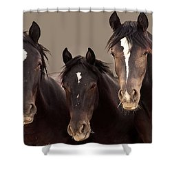 3 Amigos Sepia Wild Mustang Shower Curtain by Rich Franco