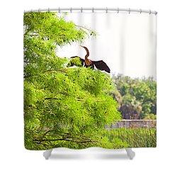 Anhinga Anhinga Anhinga On A Tree Shower Curtain