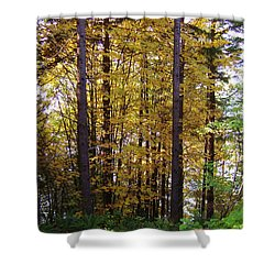 Autumn 5 Shower Curtain by J D Owen