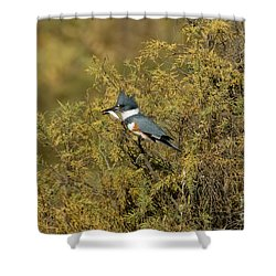 Belted Kingfisher With Fish Shower Curtain