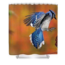 Blue Jay Shower Curtain by Scott Linstead