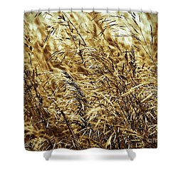 Brome Grass In The Hay Field Shower Curtain by J McCombie