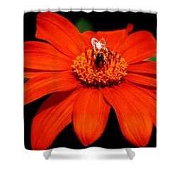 Busy Bee  Shower Curtain by J D Owen