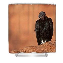 California Condor Shower Curtain