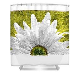3 Daisies  Shower Curtain by Mauro Celotti