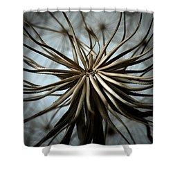 Dandelion Shower Curtain by Stelios Kleanthous