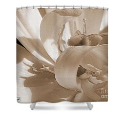 Double Late Tulip Named Angelique Shower Curtain