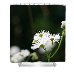 Shower Curtain featuring the photograph Enlightened  by Neal Eslinger