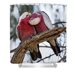 Galahs Shower Curtain by Steven Ralser