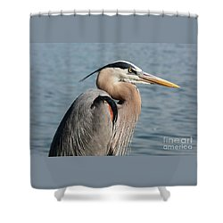 Great Blue Heron Profile Shower Curtain by Carol Groenen