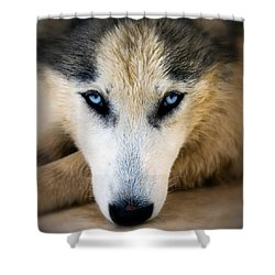 Husky  Shower Curtain by Stelios Kleanthous