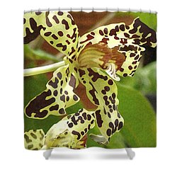 Leopard Orchids Shower Curtain by Ellen Henneke