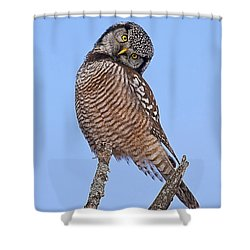 Northern Hawk Owl Shower Curtain by John Vose