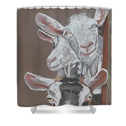 3 Nosey Goats Shower Curtain