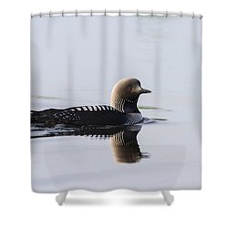 Pacific Loon Shower Curtain