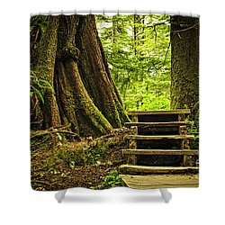 Path In Temperate Rainforest Shower Curtain by Elena Elisseeva