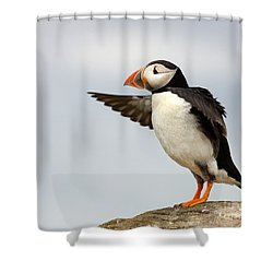 Puffin On The Farne Islands Great Britain Shower Curtain