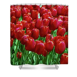 Shower Curtain featuring the photograph Red Tulips  by Allen Beatty