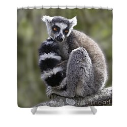 Ring-tailed Lemur Shower Curtain by Liz Leyden
