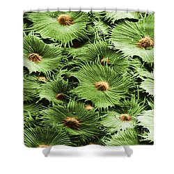 Russian Silverberry Leaf Sem Shower Curtain by Asa Thoresen