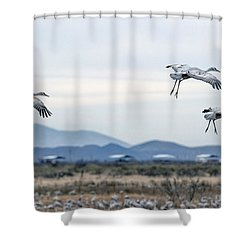Sandhill Cranes Shower Curtain