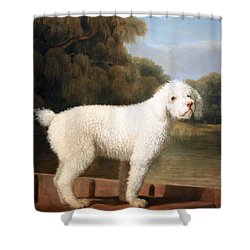 Stubbs' White Poodle In A Punt Shower Curtain by Cora Wandel