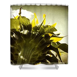 Sunflower Shower Curtain by Les Cunliffe