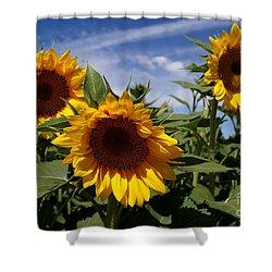 3 Sunflowers Shower Curtain by Kerri Mortenson