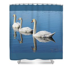 3 Swans A-swimming Shower Curtain