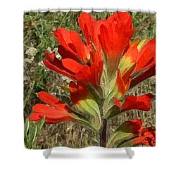 Texas Paintbrush Shower Curtain by Ellen Henneke