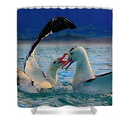 Wandering Albatross Shower Curtain by Amanda Stadther