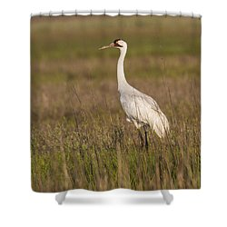 Whooping Crane Shower Curtain by Doug Lloyd