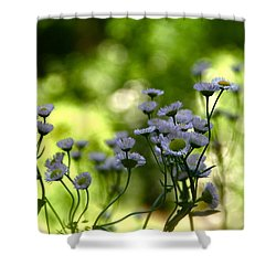Wild Daisies Shower Curtain by Tracy Male