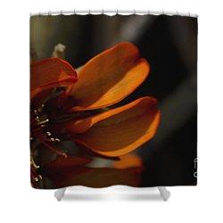 Wiliwili Flowers - Erythrina Sandwicensis - Kahikinui Maui Hawaii Shower Curtain by Sharon Mau