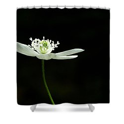 Wood Anenome Shower Curtain
