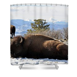 302 Shower Curtain