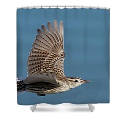 Untitled Shower Curtain by Hal Beral