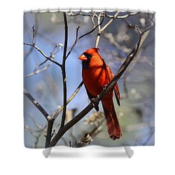 3477-006- Northern Cardinal Shower Curtain