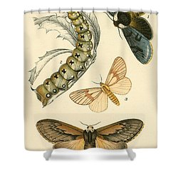 Butterflies Shower Curtain by English School