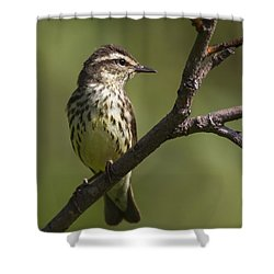 Alert Shower Curtain