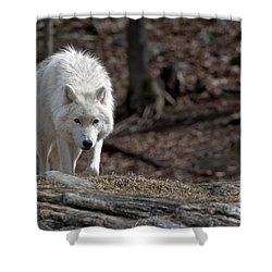 Shower Curtain featuring the photograph Arctic Wolf by Wolves Only