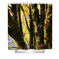 Autumn 3 Shower Curtain by J D Owen