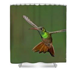Buff-bellied Hummingbird Shower Curtain by Anthony Mercieca