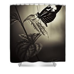 Butterfly Brown Tone Shower Curtain