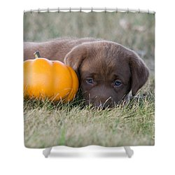 Chocolate Labrador Puppy Shower Curtain by Linda Freshwaters Arndt